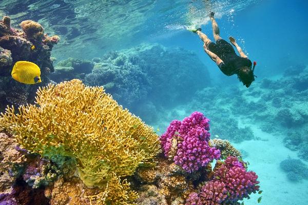 Schnorcheln im Roten Meer in Marsa Alam in Ägypten inmitten einer faszinierenden bunten Unterwasserwelt