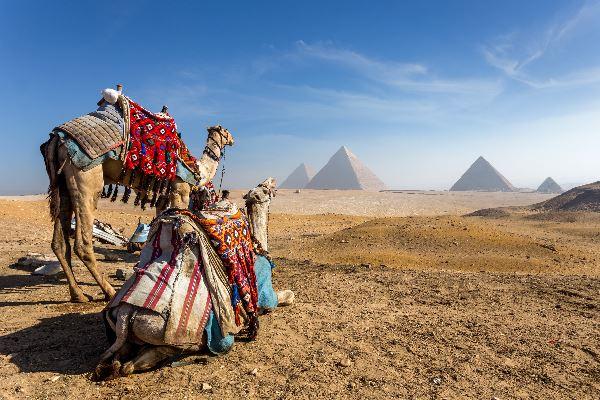Zwei ägyptische Kamele in Kairo schauen auf die Pyramiden in der Ferne