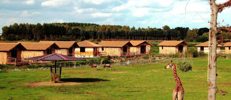 SERENGETI-PARK_LODGES_Masai-Mara-Lodges_Tieranlage_klein