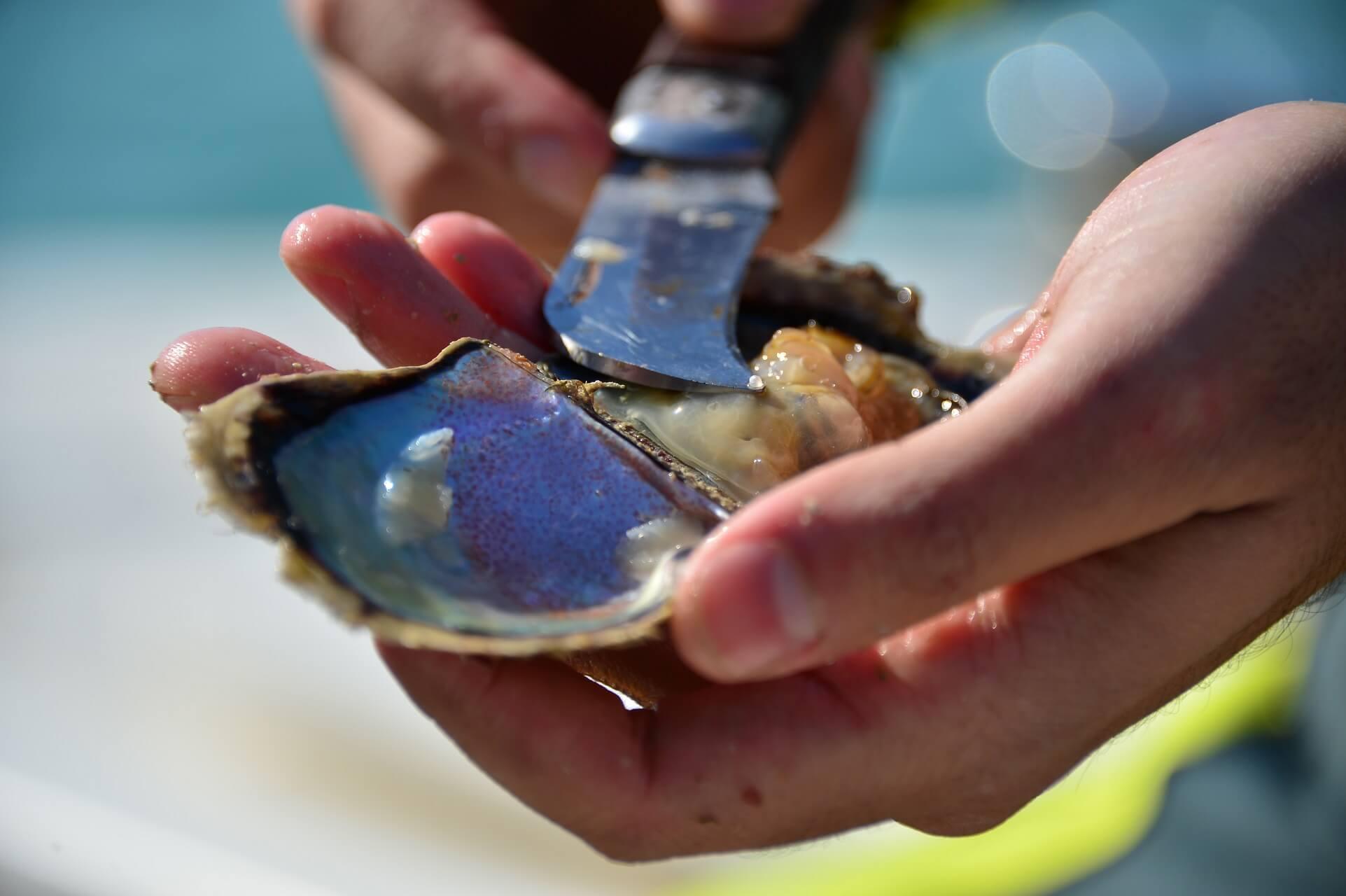 In Bahrain kann man selbst nach Perlen tauchen