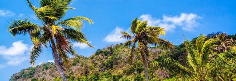 three-palm-trees-in-panama-istock_000037502014_large-2