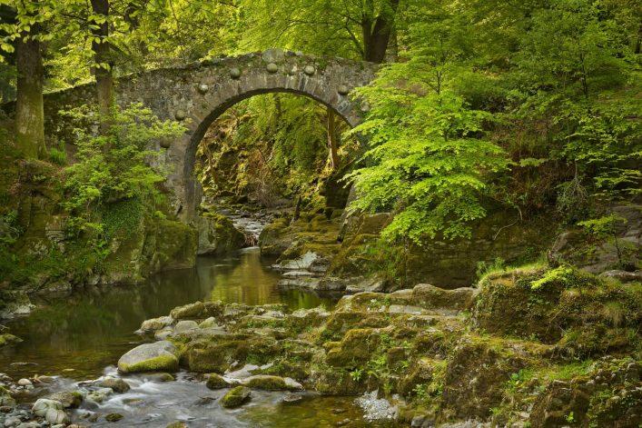 Nordirland-Tollymore-shutterstock_447608272