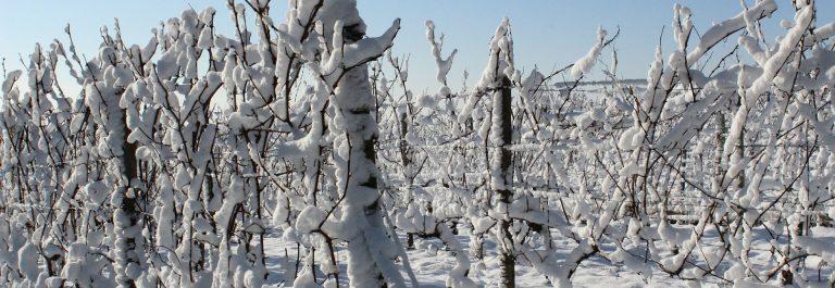 snow-607993_1920-steiermark-wein
