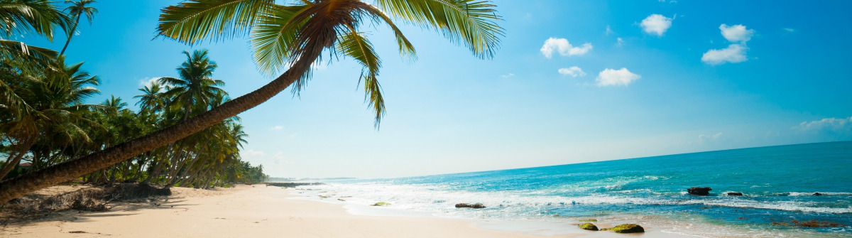 srilanka_beach_palm_109674992-Kopie