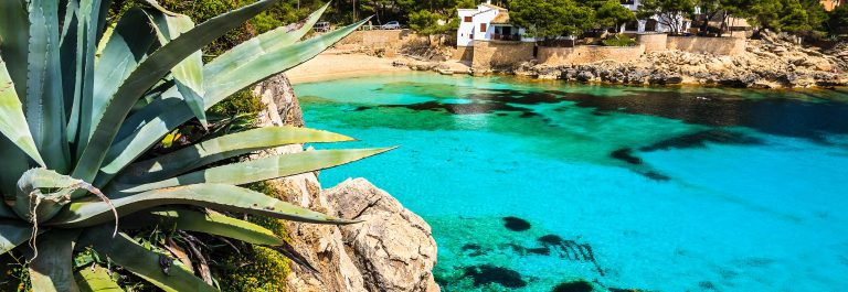 Agave-palnt-beach-bay-azure-turquoise-sea-water-hill-pine-tree-Cala-Gat-Majorca-island-Spain-shutterstock_143322982-2-Copy