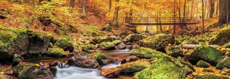 Bridge over Stream in Forest at autumn – Nationalpark Harz