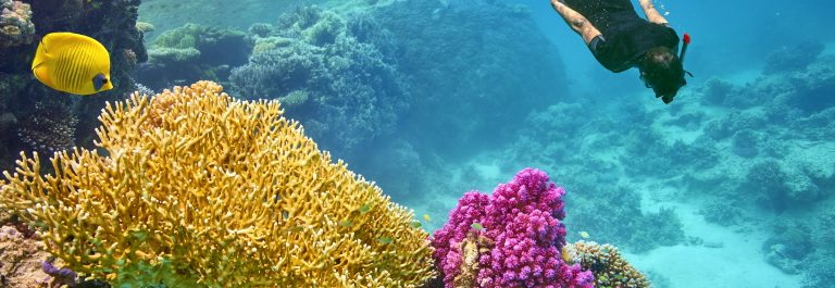 Young-woman-snorkeling-Marsa-Alam-Red-Sea-Egypt-shutterstock_359714744
