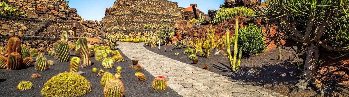 Tropical-cactus-garden-in-Guatiza-village-Lanzarote-Canary-Islands-Spain_579514030