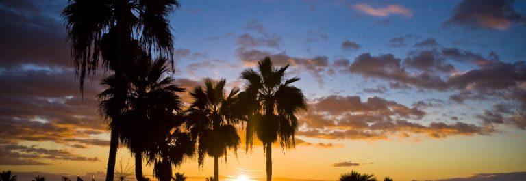 Artikelbild_Gran-Canaria_Palme_Gross
