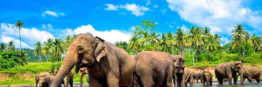 srilanka_shutterstock_128294927