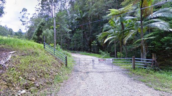 Dschungel-1-585x328